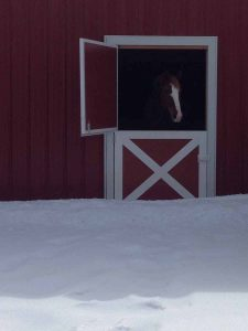 Snowy Horse Barn